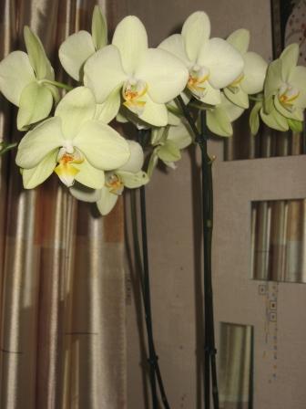 Орхидеи на подарок фото
